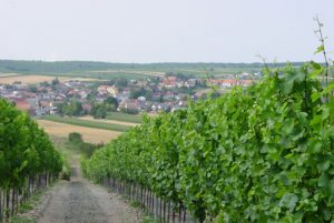 Weingarten in Schrattenberg